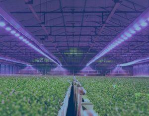 retrofitting greenhouse electricity